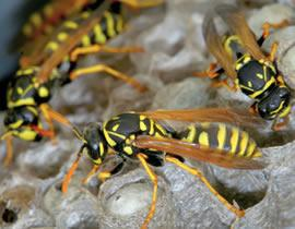 wasp nest removal salisbury wiltshire